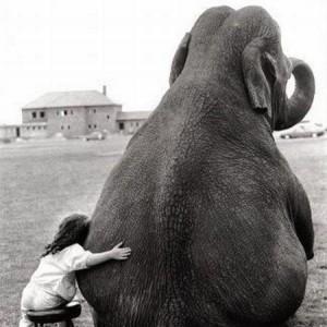 girl.elephant