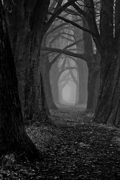 dark-way